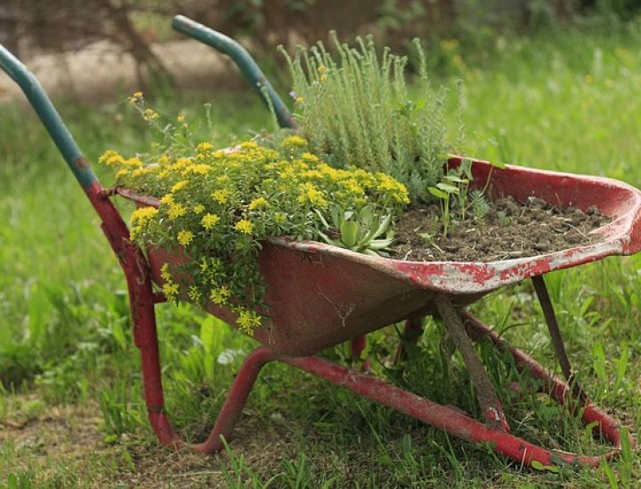Donnez du café à boire à votre jardin!