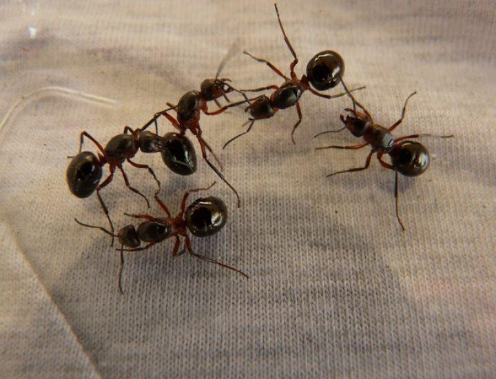 Invasion de fourmis? Pas de panique, on est là!