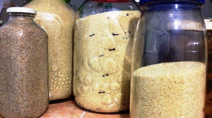 La solution contre les mites alimentaires