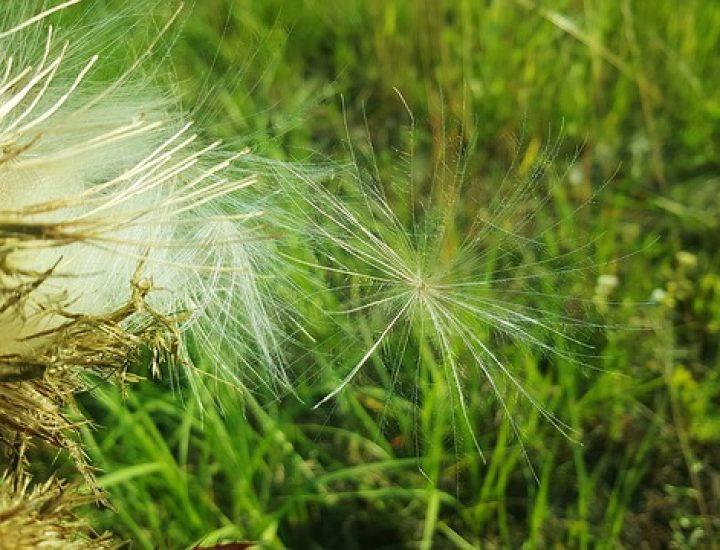 Jardin: Comment se débarrasser des mauvaises herbes naturellement