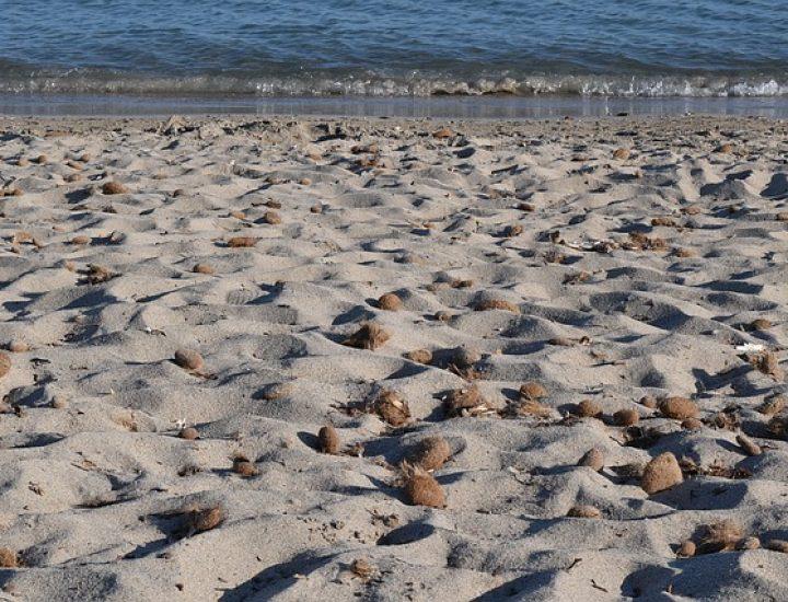 Elle est morte sur une plage