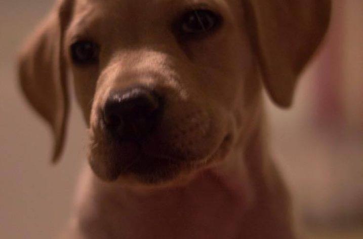 Ce qu'on vous ne dit pas quand vous adoptez un chien