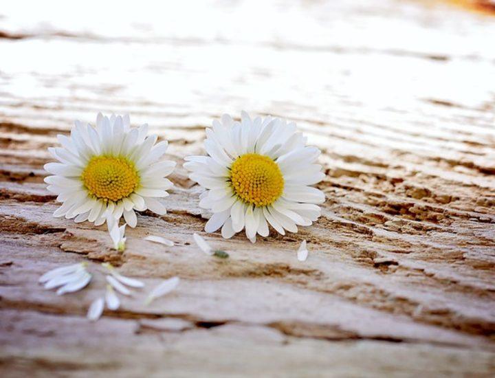 10 choses à faire pour être plus heureux