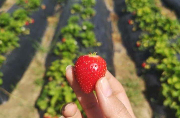 Des fruits et légumes bio livrés à domicile